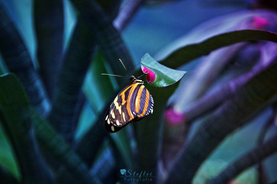 Besuch im Schmetterlingshaus